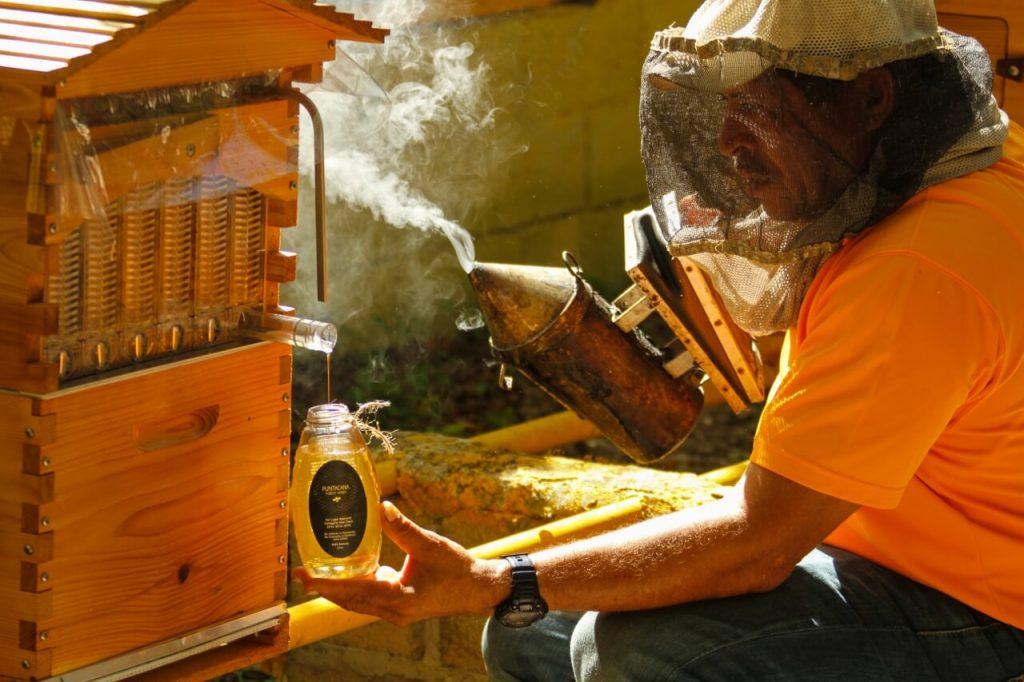 Puntacana Forest Honey gana concurso.
