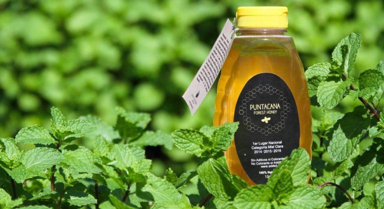 Puntacana Forest Honey gana concurso